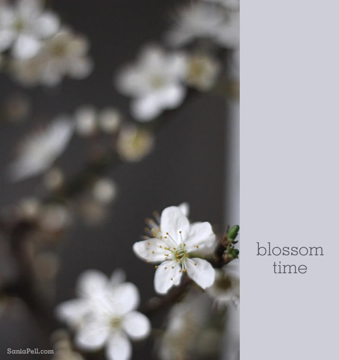 blossom by sania pell