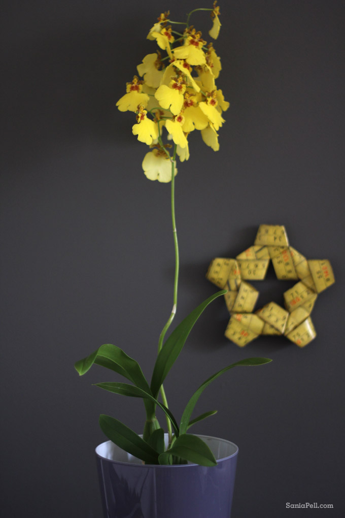 yellow orchid by sania pell
