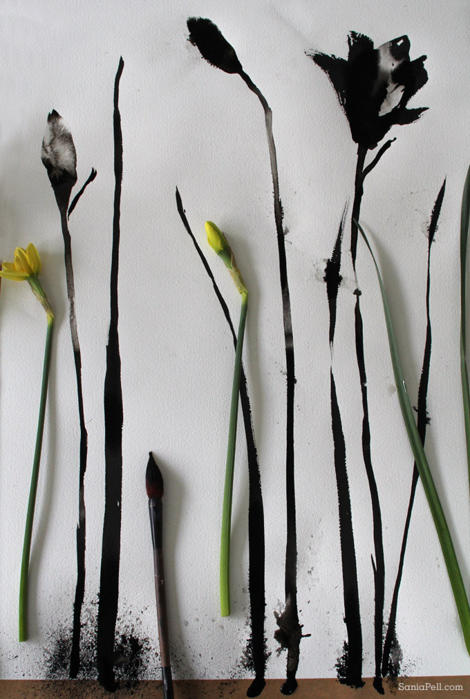 painted daffodils by Sania Pell