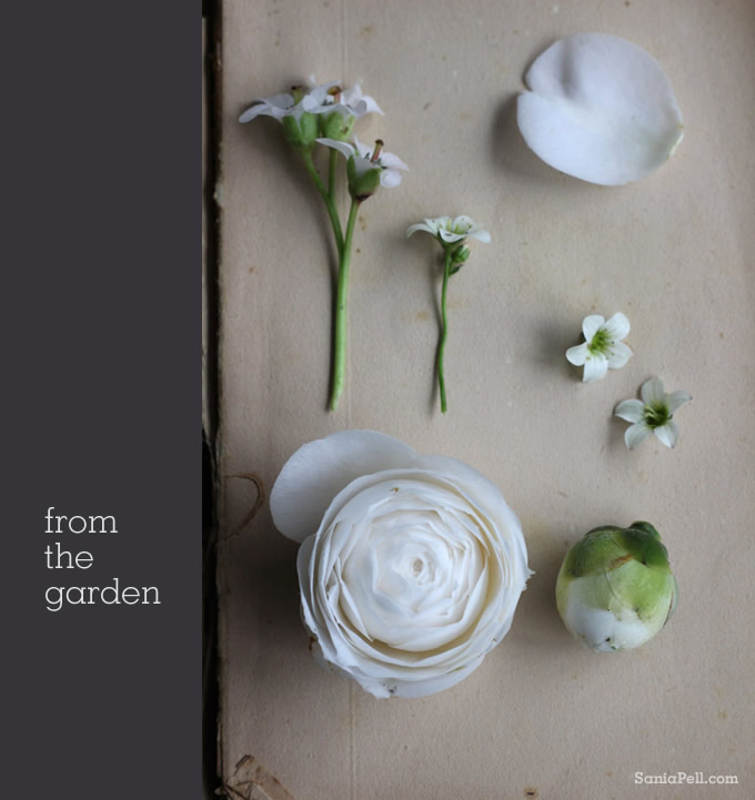 garden flowers by sania pell