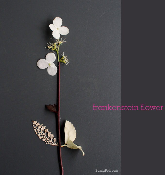 sania pell frankenstein flower