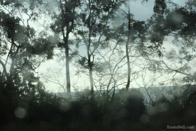 Landscape from the car by Sania Pell - Queensland, Australia