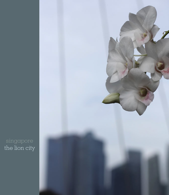 Orchids and architecture in Singapore - by Sania Pell