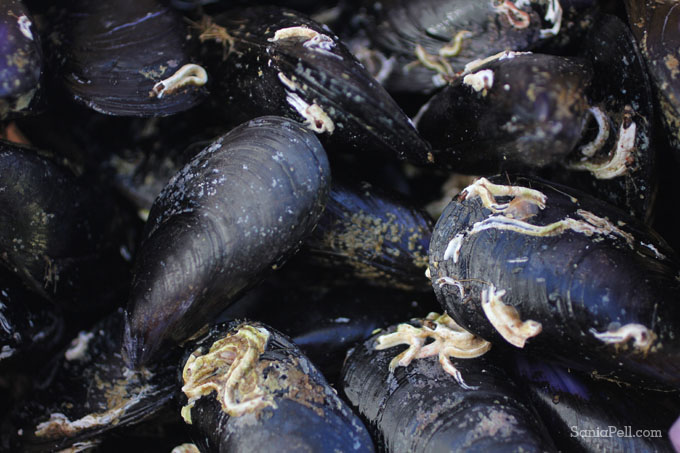 Mussels in Croatia by Sania Pell