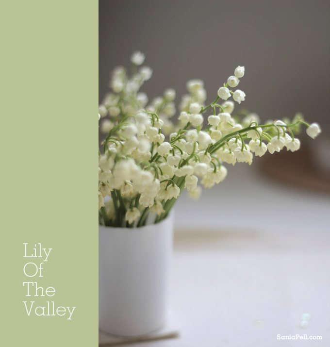 lily-of-the-valley by Sania Pell