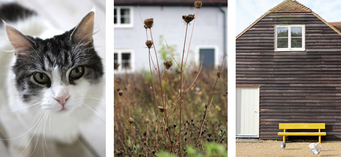 Hawthbush Farm in Sussex - Photos by Sania Pell