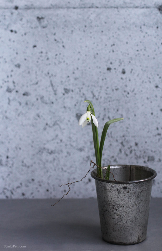Snowdrop by Sania Pell