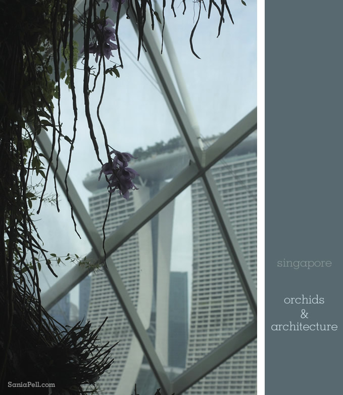 Orchids and architecture in Singapore by Sania Pell